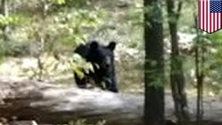 Video Bear attacks and kills hiker: Darsh Patel photographed his killer moments before death MP3, 3GP, MP4, WEBM, AVI, FLV Mei 2017