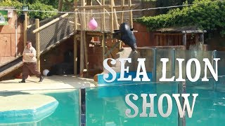 YZER TV: My 30th Birthday Vlog - Sea Lion Show - 100 video challenge - day 17