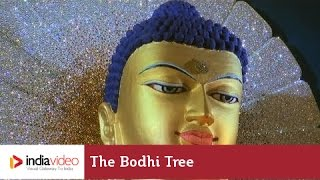 Bodh Gaya India  city photo : The Bodhi tree & Mahabodhi Temple Complex, Bodh Gaya | India Video