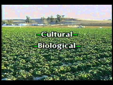 ipm - See how and why IPM was developed in agriculture. Learn the basic strategies, proper pest identification, monitoring, biological control, physical control an...