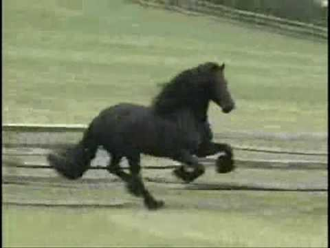horse - video I made featuring the horses of Iron Springs Farm. Just for fun. Song: Chemicals React - Aly & AJ No, I am NOT riding in any of the clips, nor did I fil...