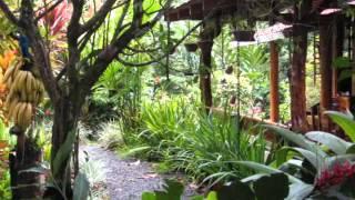 Cahuita Costa Rica  city images : Honeymoon in Cahuita Costa Rica