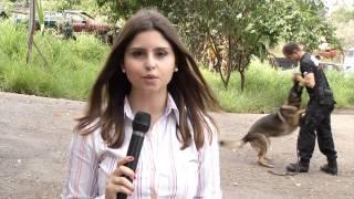 Cães da Polícia Civil de Minas Gerais