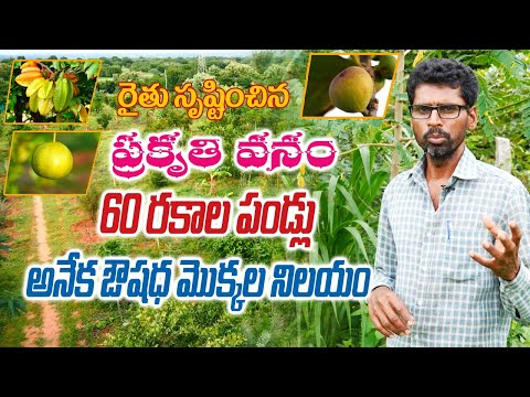 Natural Farm with 60 Varieties of Fruits and Medicinal Plants