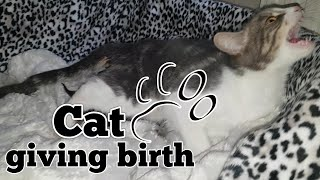 Video CAT GIVING BIRTH. THE 3 STAGES OF CAT BIRTH. ASMR STYLE. MP3, 3GP, MP4, WEBM, AVI, FLV Januari 2019