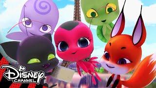 Miraculous Ladybug | Meet the Kwamis! ✨| Disney Channel UK