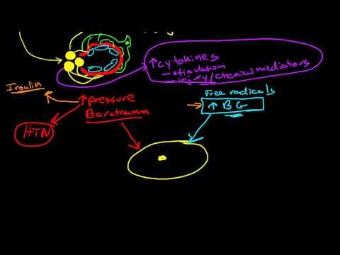 Pathophysiology of Diabetic Nephropathy