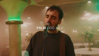 Download Lagu Palm - Dog Milk | Audiotree Far Out Mp3