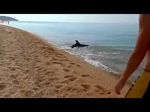 как ловить в крыму на черном море