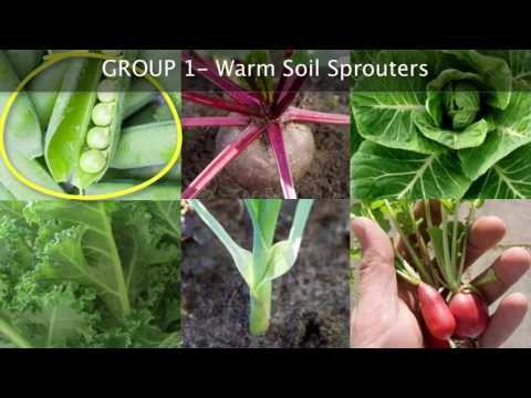 Fall Vegetable Garden Planning - Choosing the Best Plants for Autumn Growing