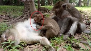 Don't Touch It I will Fight You Big Monkey Run A Way ST241 Video