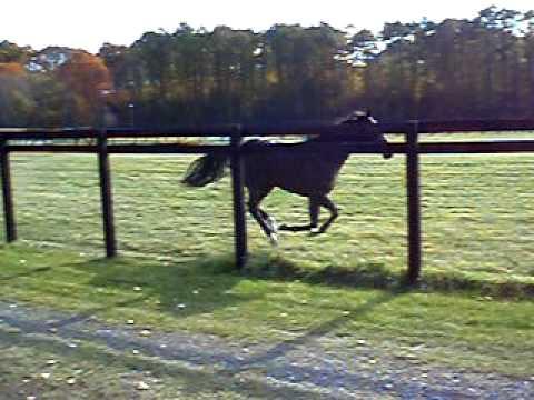「繋養先の牧場での展示放牧中、鼻歌交じりに駆けていく名馬ディープインパクト」のイメージ