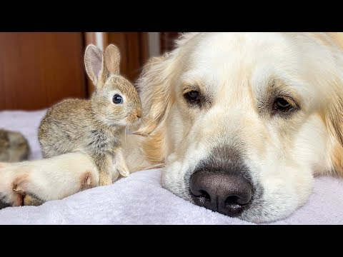 This Dog Adopted 5 Baby Bunnies and It's Beyond Adorable!