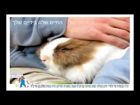 פרויקט 'תהיה בנאדם' - למניעת התעללות בבעלי חיים