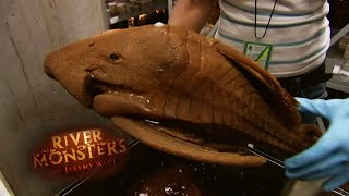 Strange Amazonian Fish In Alcohol - River Monsters