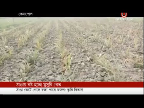 Crop farms facing losses (16-01-2019) Courtesy: Independent TV