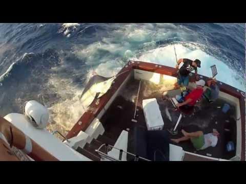 不同角度拍攝 漁夫和600磅劍魚 戰鬥的過程!