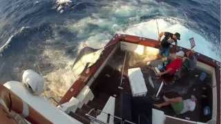600lb Black Marlin Jumps In Boat And Lands On The Crew!