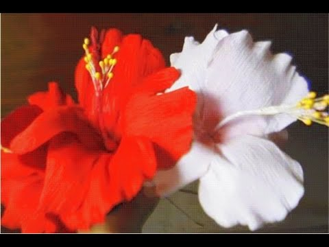 How to make paper flower – Hibiscus