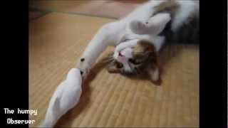 MIGLIORI VIDEO DI ANIMALI DIVERTENTI E TENERI (1°parte) --best Clip Of Animals Funny Youtube