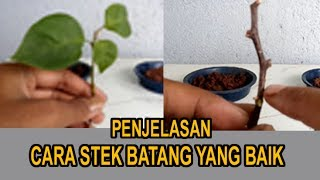 Video Penjelasan Cara Stek Batang Yang Baik MP3, 3GP, MP4, WEBM, AVI, FLV September 2018