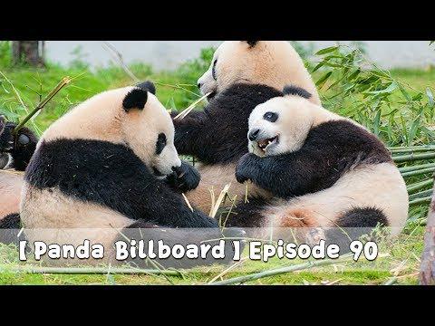 【Panda Billboard】Episode 90 | iPanda