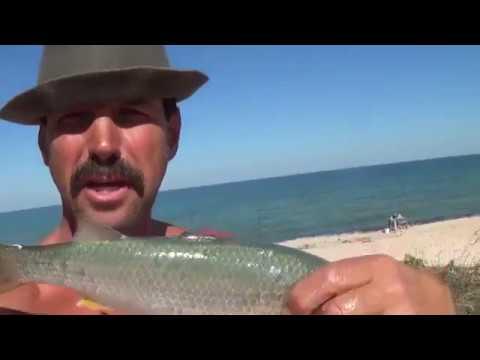 рыбалка сверху азовском град   со берега видео пеленгаса