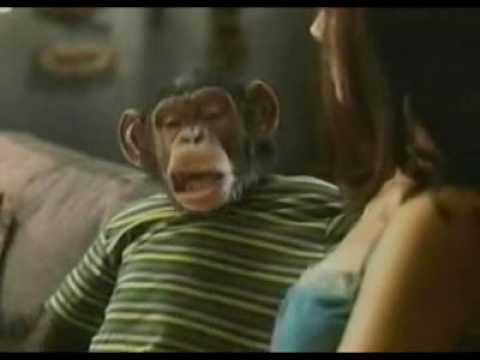 Funny Bud Light Chimp Commercial