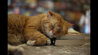 Meet The Great Catsby, the bookshop cat