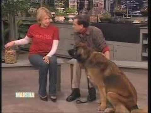 Mikko the Leonberger on Martha Stewart