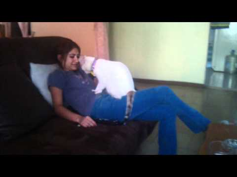 Gato dando masaje a su dueña (funny cat massaging it's owner)