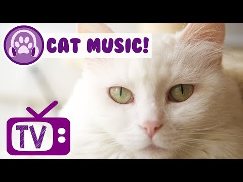 Cat Tv Tv For Cats To Watch Ducks Mp3 Download Naijaloyal Co