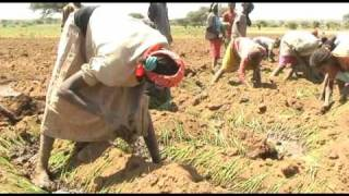 DROUGHT-PRONE ETHIOPIA FACES FOOD SHORTAGES.wmv