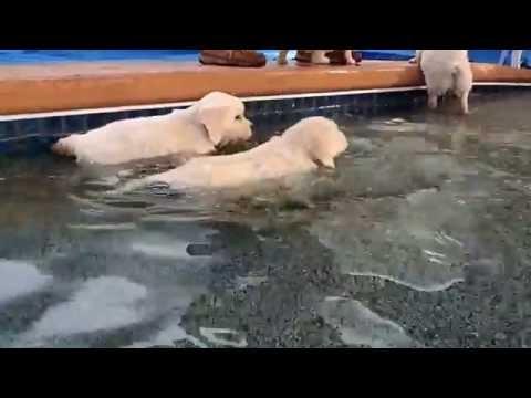 Primer baño de unos perritos...