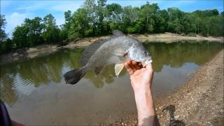 Drums (PA) United States  City new picture : River Fishing #1,Freshwater Drum on Nightcrawlers