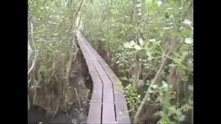 Samut Prakan Thailand  city images : Mangrove forest in Samut Prakan, Thailand