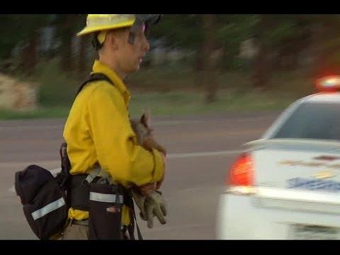 Firefighter Rescues Baby Deer