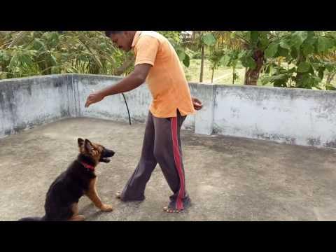 My dog training