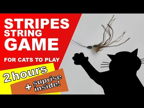 Cat Games: 2 Hours! (Surprise Inside)