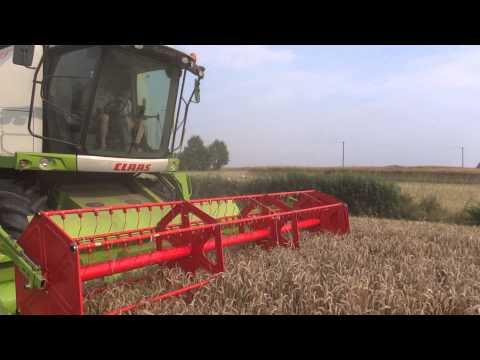 Уборка пшеницы.