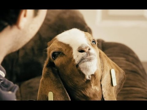 The Goat - A Short Comedy Film