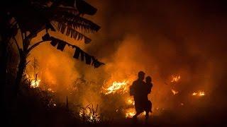 Video VLADIVOJSKO - Bojkotuj palmový olej