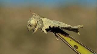 Video Loggerhead Shrike impales horned lizard - Texas Parks and Wildlife [Official] MP3, 3GP, MP4, WEBM, AVI, FLV Oktober 2018
