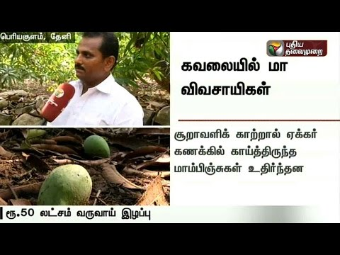 Heavy-rain-in-Thenis-Periyakulam-affects-mango-cultivation
