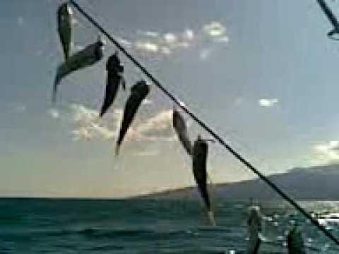 снасть на барабулю в черном море