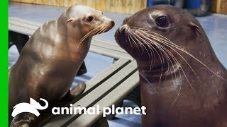 A Day of Seals and Sea Lions | The Aquarium: A Deeper Dive by Animal Planet