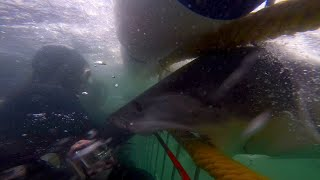 SharkWeek  Starts Sun Jul 23 From leaping sharks to close calls in the deep, check out these unbelievable shark encounters caught on home video.