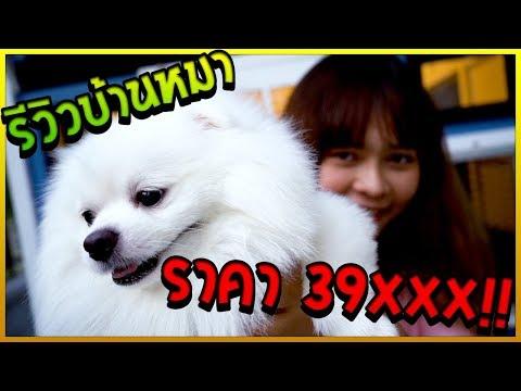 พี่ขวัญพาดูบ้านหมาฟูจิ ราคา 39 XXX บาท