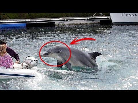 <p>La gente asume que los <strong>delfines</strong> son amigables y juguetones, ya estén en libertad o en cautividad, pero pocas personas saben que estos animales tienen un lado oscuro y hasta malvado, atacando a otras especies sin motivo aparente, incluyendo a los humanos. Como un famoso capítulo de los simpsons en dónde los <strong>delfines</strong> se vuelven <strong>asesinos</strong> </p>