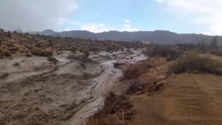 Kết quả của một trận mưa to trong sa mạc :-ss
